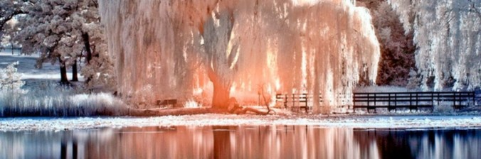 cropped-weeping-willow.jpg